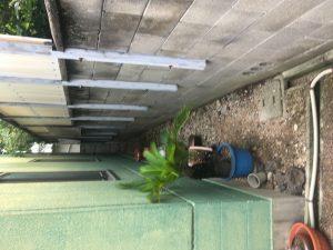 八尾市で草むしり