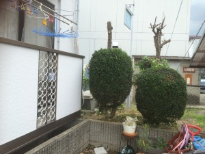 庭木の剪定