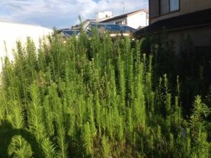 草刈り 羽曳野市