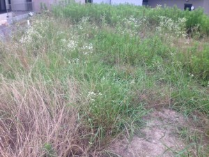 柏原市 草刈り